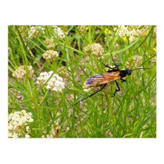 Cartão selvagem da vespa de New mexico