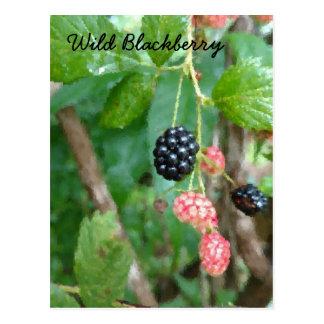 Cartão selvagem do verão de Blackberry