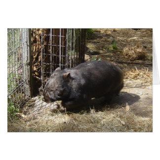 Cartão Selvagem para Wombats