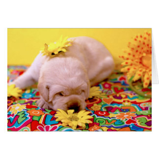 Cartão Semana 2, Senhora enevoada Amarelo