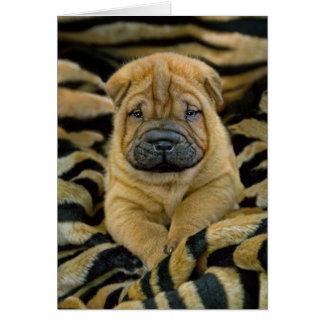 Cartão semanas de idade do filhote de cachorro de