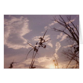 Cartão Sementes no início da noite