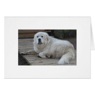 Cartão Senhor Alce, 175 libras e todo o cão