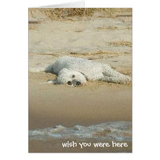 Cartão Senhorita Você-goldendoodle que coloca na praia