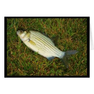 Cartão Sentimento como um peixe fora da água? Obtenha o