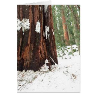 Cartão Sequóia na neve