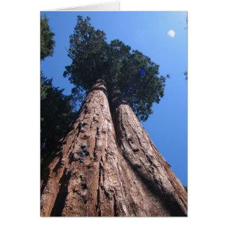 Cartão Sequóias gigantes gêmeas, parque nacional de