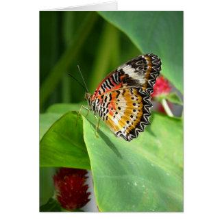 Cartão série 2009 pintada da borboleta do ~ do leopardo
