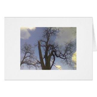 Cartão Série da árvore do céu