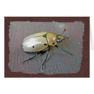 Cartão Série do besouro da vinha (punctata de Pelidnota)