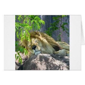 Cartão sesta do leão