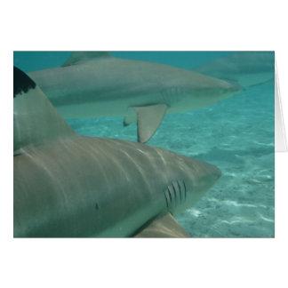 Cartão shark