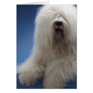 Cartão Sheepdog