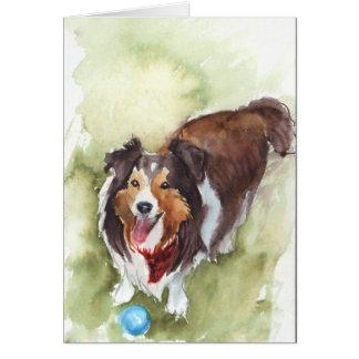 Cartão Sheltie/cartão do cão carneiros de Shetland