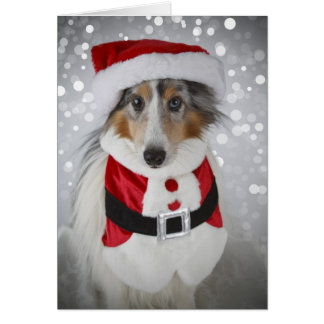 Cartão Sheltie Papai Noel