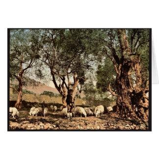 Cartão Shephard que tende carneiros no bosque