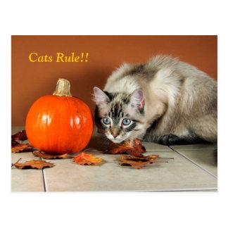 Cartão Siamese da regra dos gatos