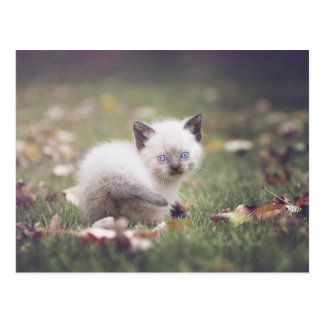 Cartão Siamese pequeno do gatinho