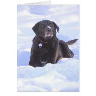 """Cartão """"Sidney o cão da maravilha """""""