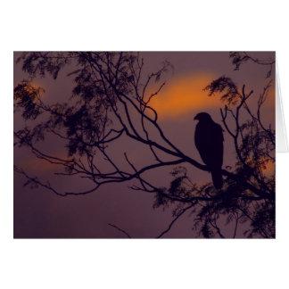 Cartão Silhueta do falcão de Harris (unicinctus de