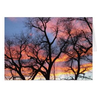 Cartão Silhuetas da árvore no crepúsculo