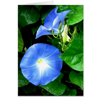 Cartão Simpatia - corriola azul celestial