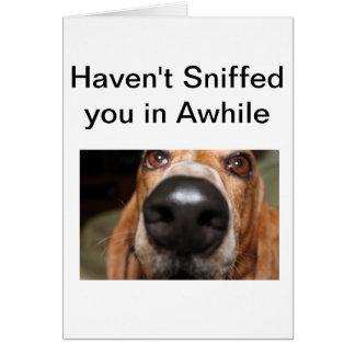 Cartão Sniffs de Roofus