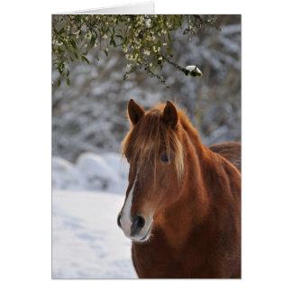 Cartão Sob o visco, Natal do cavalo