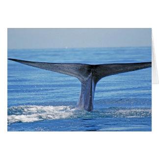 Cartão Solha da baleia azul