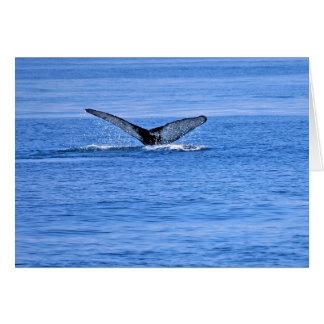Cartão Solha da baleia de Humpback