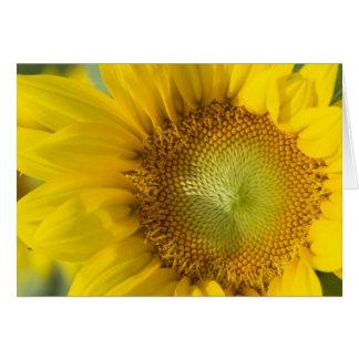Cartão Sombra do ouro do girassol