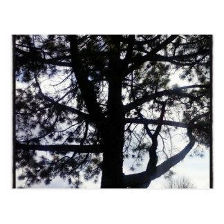 Cartão sombrio do pinheiro