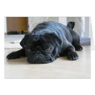 Cartão Sono preto bonito do Pug