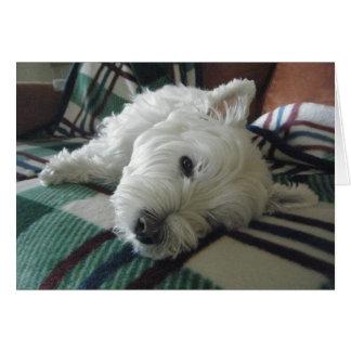 Cartão sonolento da foto de Westie do sofá