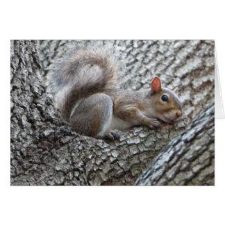Cartão sonolento do esquilo