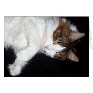 Cartão sonolento do gato