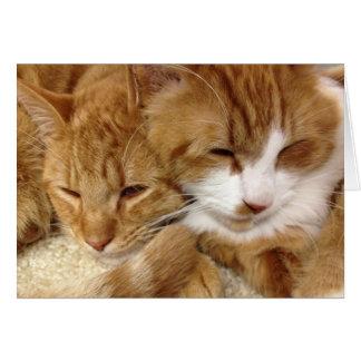 Cartão sonolento dos gatinhos do salvamento do