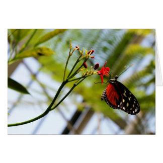 Cartão Sorvos da borboleta