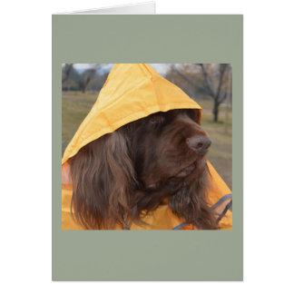 Cartão Spaniel de Sussex que espera a chuva