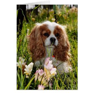 Cartão Spaniel dos Cavalier de Joey Blenheim