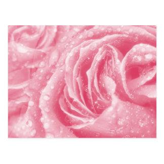 Cartão Sparkling do rosa do rosa Cartao Postal