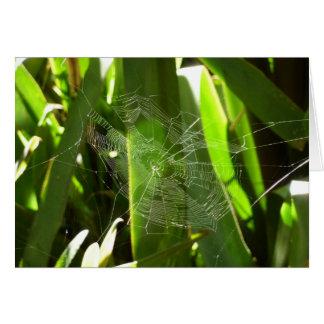 Cartão Spiderweb na natureza verde das folhas tropicais