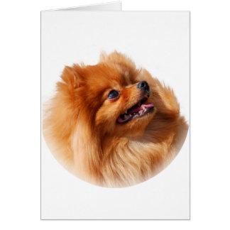 Cartão Spitz de Pomeranian