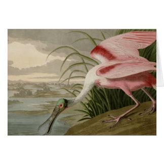 Cartão Spoonbill róseo