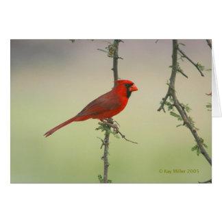 Cartão Sr. Cardinal