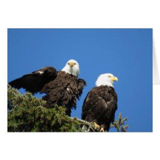 Cartão Sr. e Sra. águia americana