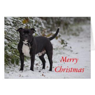 Cartão Staffordshire bull terrier