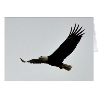 Cartão Subir da águia americana