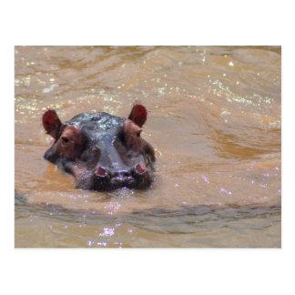 Cartão submerso do hipopótamo