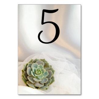Cartão Succulent verde nos números brancos da mesa do